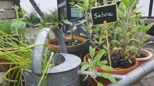 Krydderurter har en væsentlig plads i min have